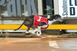 Gimme Fuel turned on the scramjets to claim a Group 1 win for trainer Kelly Bravo. 113134 Picture: SUPPLIED