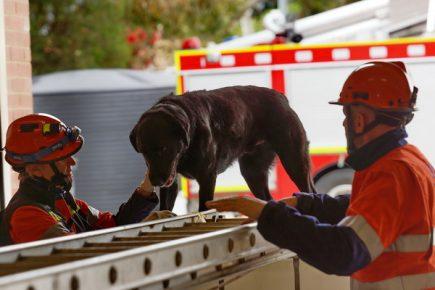 Dandenong Dog Rescue