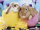 Good egg. The State Government wants to introduce an Easter Sunday holiday.